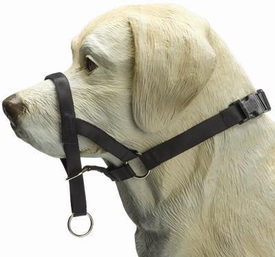Dog control boxer/korte neus zwart
