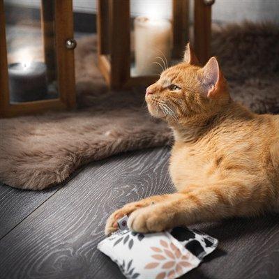 Canadian cat speelkussen flower met catnip grijs / beige