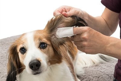 Trixie ear care vingerpads
