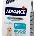 Advance puppy protect maxi