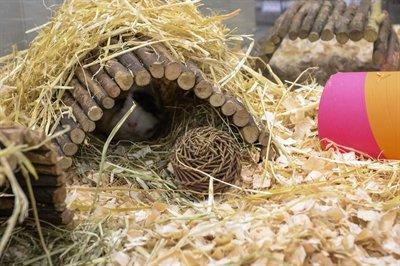 Happy pet playstix knaaghuis