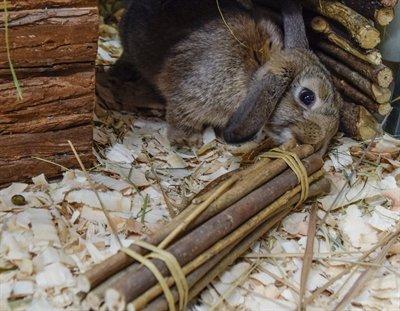 Happy pet wilgen value pack 2 sticks/2 balls