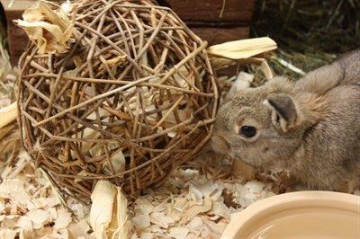 hamster speelbal
