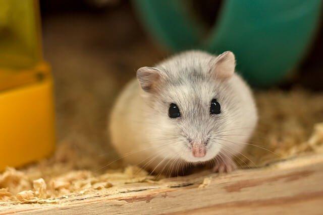 Alles voor je hamster