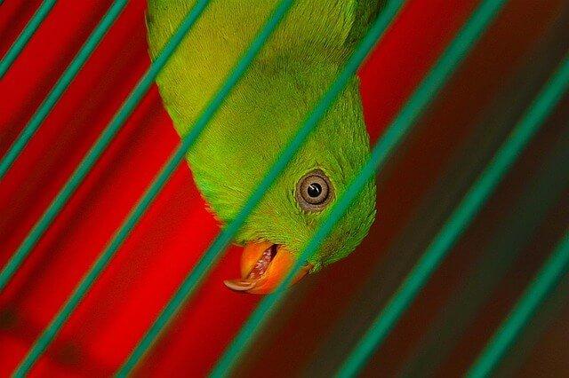 Alles voor je papegaai