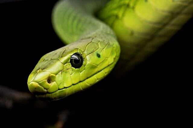Alles voor je slang