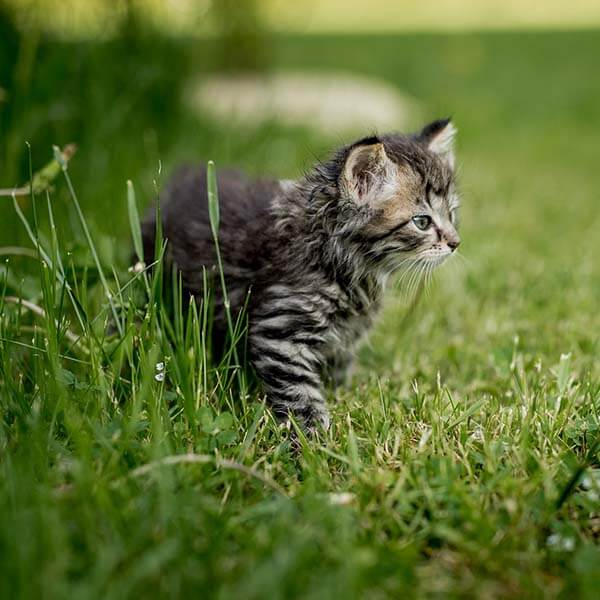 katten outdoor