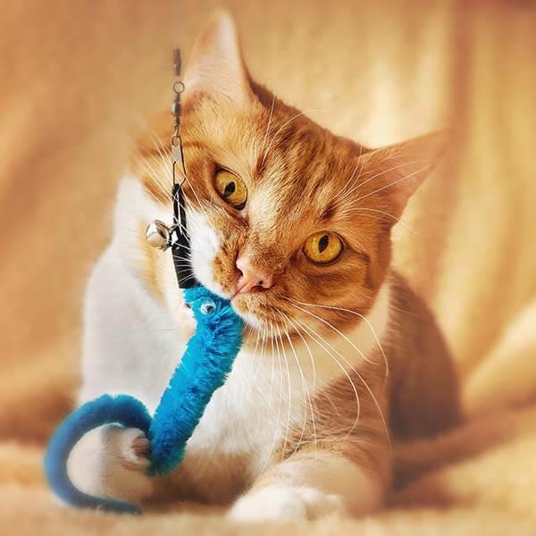 katten speelgoed