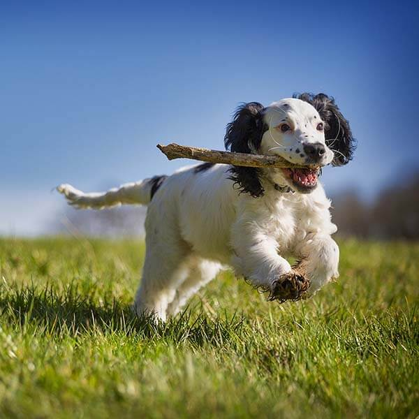 voerdingssupplementen hond